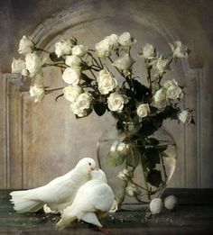 peace-dove-white-doves