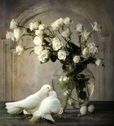 peace-dove-white-doves